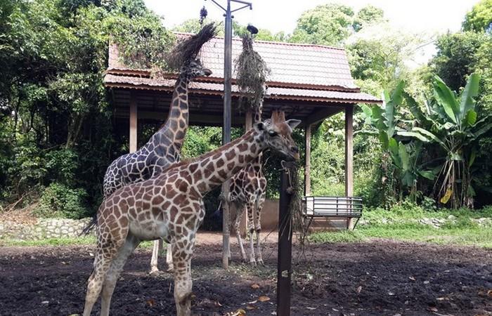 Negeri Melaka mempunyai Zoo Melaka sebagai tarikan percutian dari Malaysia