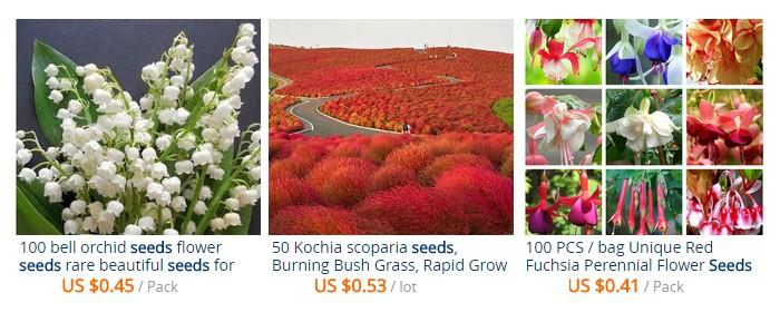 Dapatkan biji benih tumbuhan bunga yang cantik dari luar negara melalui website Aliexpress