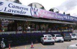 Permandangan hadapan pintu masuk Cameron Lavender